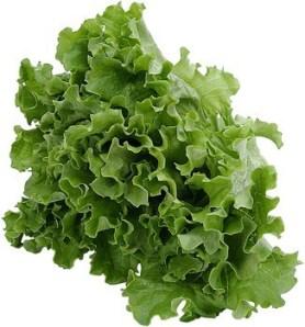leaf_lettuce_lg13