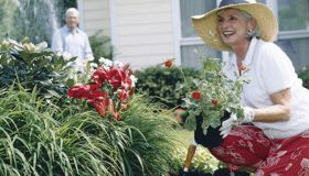 Select and Care of Annuals and Perennials