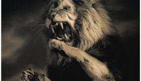 Lion (Panthera leo) on hind legs, roaring, indoors (toned B&W)