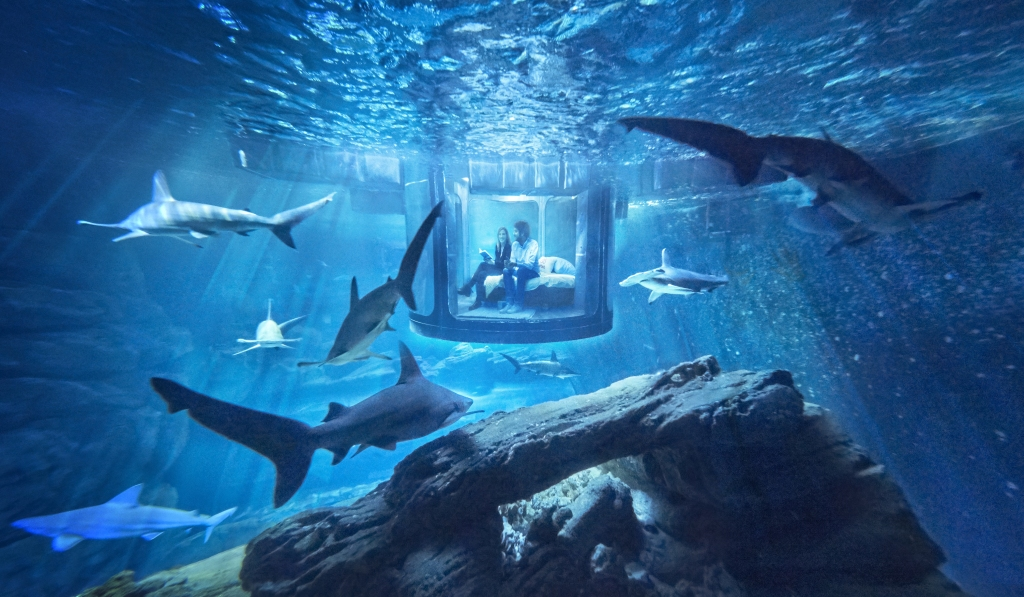 A Night Among The Sharks: Aquarium De Paris Hosts The First Ever Underwater Bedroom On Airbnb