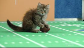 Hallmark Channel's 5th Annual Kitten Bowl as seen on Hallmark.