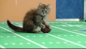 Hallmark Channel's 5th Annual Kitten Bowl as seen on Hallmark.
