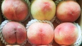 Fresh peaches in neat rows